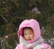 Chickadee hovering over child's head