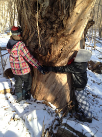 Students hugging a tree