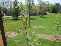 Orchard with Fruit Trees