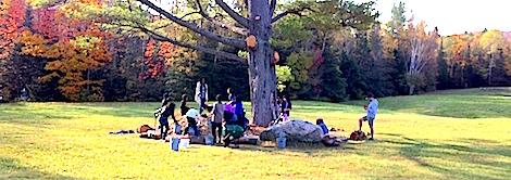 Students putting wood chips in at the base of a large white pine tree to protect its roots